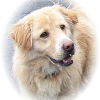 Adopt A Pet :: Clem - Courtesy Posting - New Canaan, CT