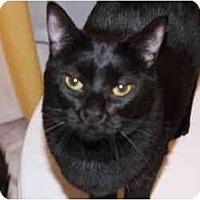 Adopt A Pet :: Abby - Little Rock, AR