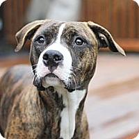 Adopt A Pet :: Dina - Reisterstown, MD