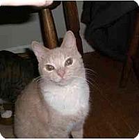 Adopt A Pet :: Jingles - Lombard, IL