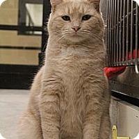 Adopt A Pet :: Taffy - Chesapeake, VA