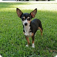 Adopt A Pet :: snickers - Washington, NC