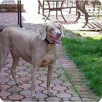 Adopt A Pet :: LuLu - Attica, NY