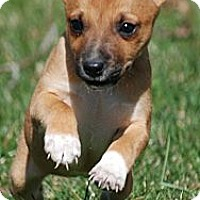 Adopt A Pet :: Kelsee - Providence, RI