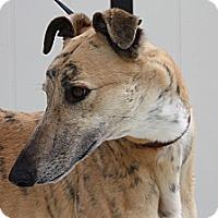 Adopt A Pet :: Phineas - Orange County, CA
