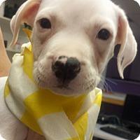 Adopt A Pet :: Tiari - Scottsdale, AZ