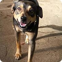 Adopt A Pet :: Kody - Alpharetta, GA