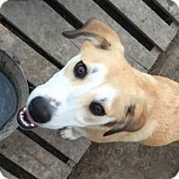 Adopt A Pet :: Sandy - Alvarado, TX