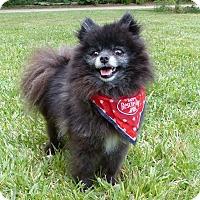 Adopt A Pet :: King - Mocksville, NC