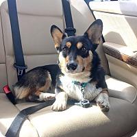 Adopt A Pet :: Palmer - Lomita, CA
