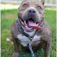 Adopt A Pet :: Tater Tot - Mission Viejo, CA