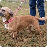 Adopt A Pet :: Buffy - Norwalk, CT