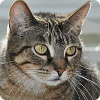 Adopt A Pet :: Miata - Columbus, OH