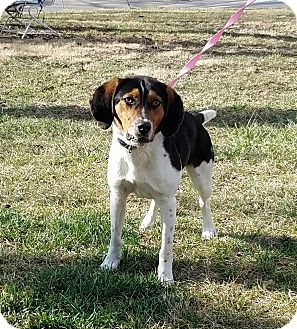 Hound (Unknown Type) Mix Dog for adoption in Atchison, Kansas - Zain