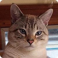Adopt A Pet :: Dozer - San Diego, CA