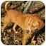Photo 4 - Boxer/Shar Pei Mix Dog for adoption in Hillsboro, Ohio - Jasper