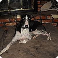 Adopt A Pet :: JSK Prime Time - Knoxville, TN