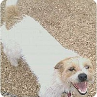 Adopt A Pet :: Max in OK - Oklahoma City, OK