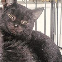 Adopt A Pet :: Inky - Stanhope, NJ