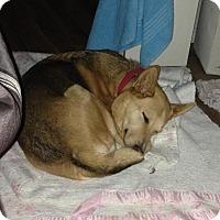 Adopt A Pet :: Patsy - Saskatoon, SK