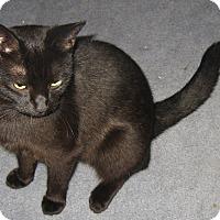 Adopt A Pet :: Nicole - brewerton, NY