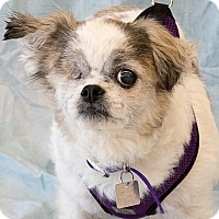Adopt A Pet :: Winnie Dot - Lansing, MI