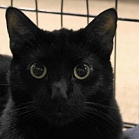 Adopt A Pet :: Jonah (Big Jonah) - Las Vegas, NV