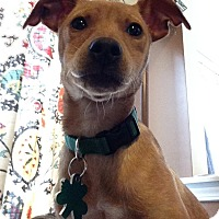 Adopt A Pet :: Rory - Alpharetta, GA