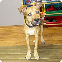 Adopt A Pet :: 17-d04-026 Ellie - Fayetteville, TN