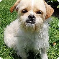 Adopt A Pet :: Trumpet - Los Angeles, CA