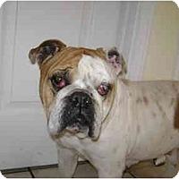 Adopt A Pet :: Camille - Winder, GA