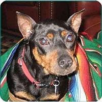 Adopt A Pet :: Timmy - Swiftwater, PA