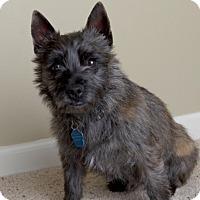 Adopt A Pet :: Jared-pending adoption - Omaha, NE