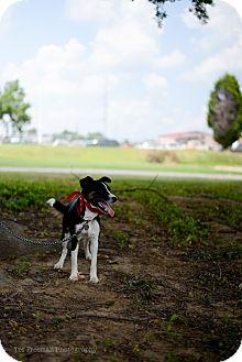 Border Collie Mix Dog for adoption in Muldrow, Oklahoma - Skittles
