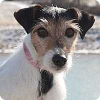 Adopt A Pet :: Nancy - Staunton, VA