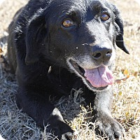 Adopt A Pet :: Avery - Mayflower, AR