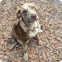 Adopt A Pet :: Cher - Macon, GA