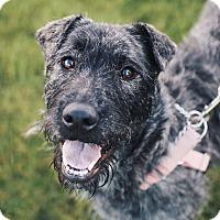 Adopt A Pet :: Pumpkin - Pitt Meadows, BC
