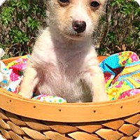 Adopt A Pet :: Romeo-ADOPTION PENDING - Boulder, CO
