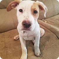 Adopt A Pet :: Patch - APPLICATIONS CLOSED - Livonia, MI