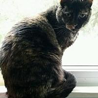 Adopt A Pet :: Cali - Taylor, MI