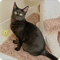 Adopt A Pet :: Marx - Trevose, PA