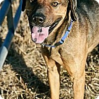 Shepherd (Unknown Type) Mix Dog for adoption in Jackson, Mississippi - Lucca
