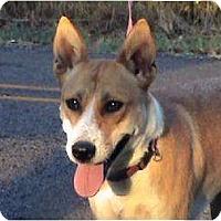 Adopt A Pet :: L-Macy - Tyler, TX