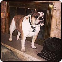 Adopt A Pet :: Dozer - Herriman, UT
