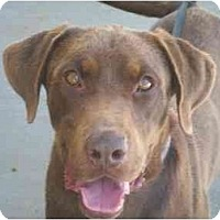 Adopt A Pet :: Trooper - Albany, NY