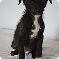 Adopt A Pet :: Moe - Aurora, CO