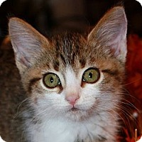 Adopt A Pet :: Emmy - Xenia, OH