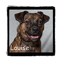Adopt A Pet :: Louise - Warren, PA