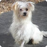Adopt A Pet :: Tibbits - Norwalk, CT